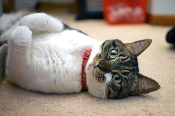 cat being cute