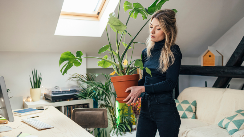 A person moves into a new home while carrying a potted plant.