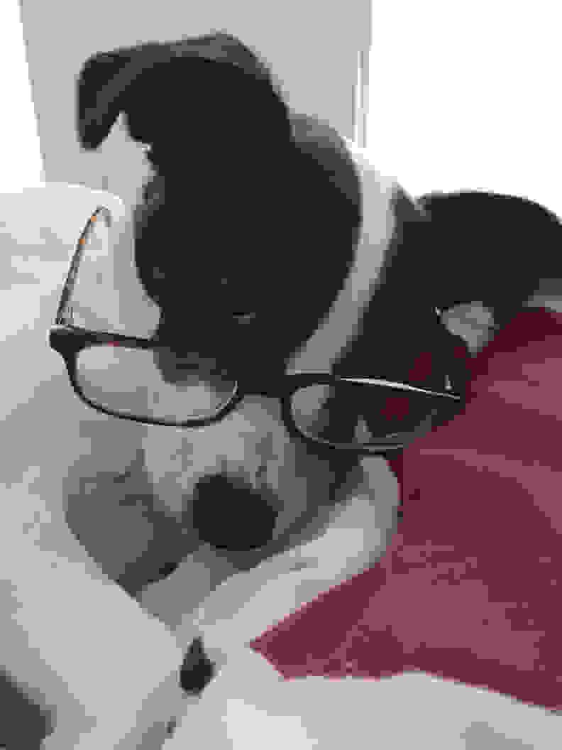 Dog loves Casper mattress