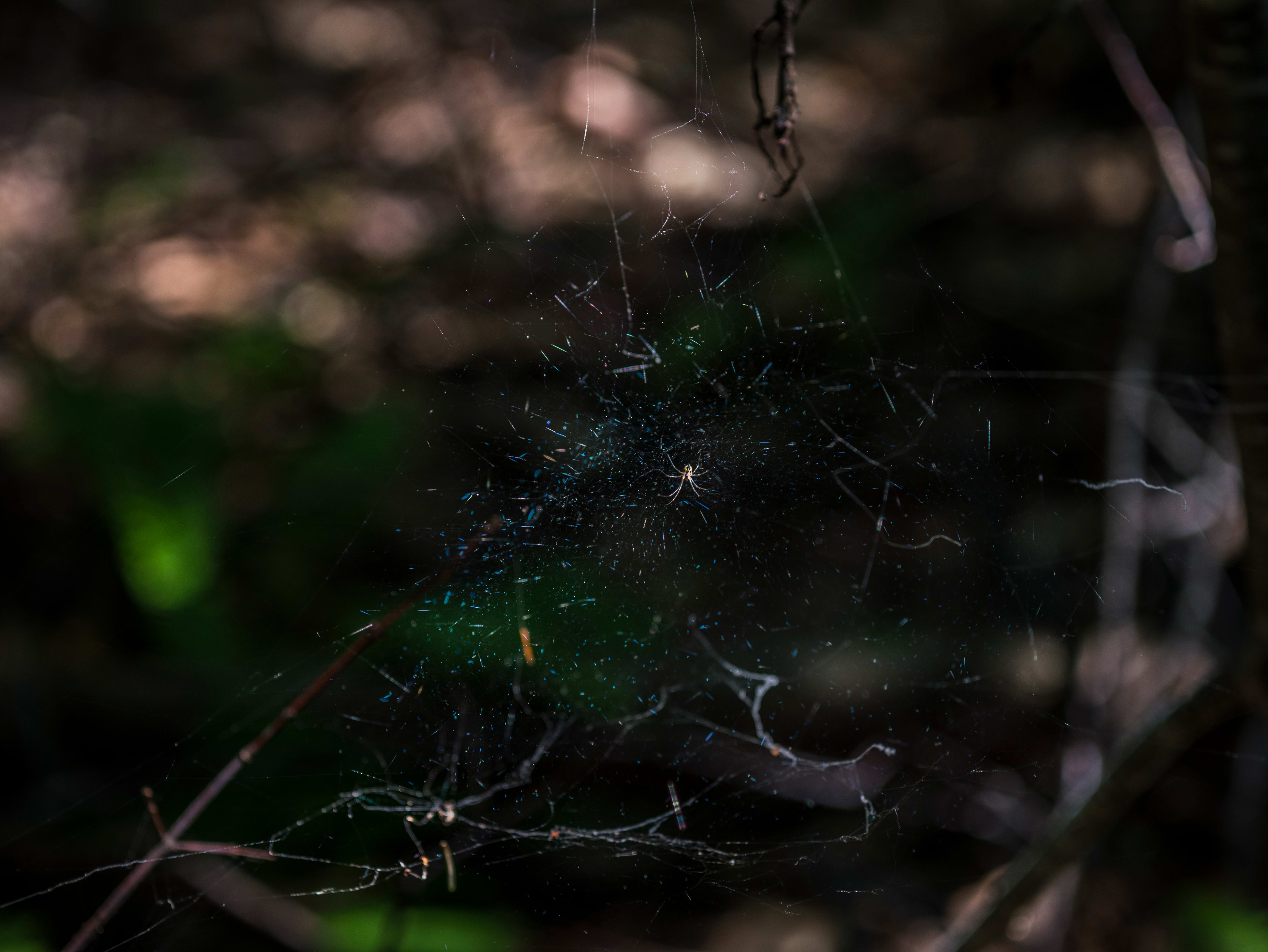 A photo taken by the Panasonic Lumix G7 of a spiderweb.