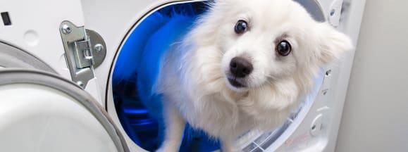 Dryer sheets hero