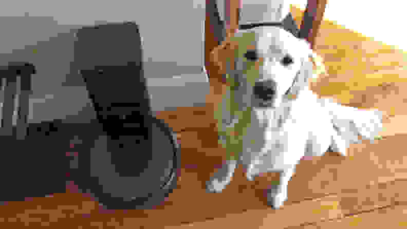 An image of a dog staring up at the camera while it sits alongside a Roomba.
