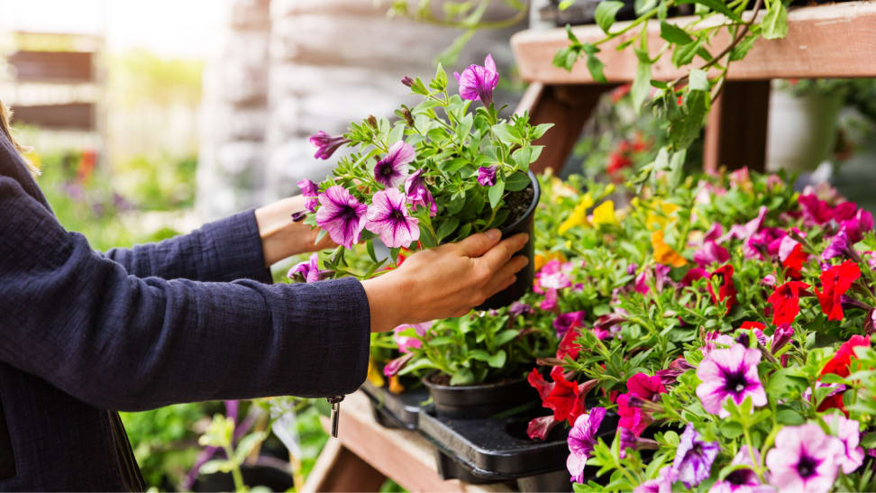 What To Look For When Buying Plants Online And In Store Reviewed Home Garden