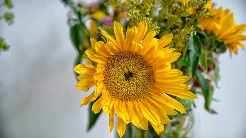 Baking_soda_flowers_wilted