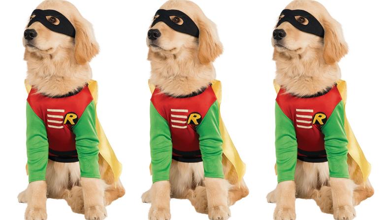 Robin pup