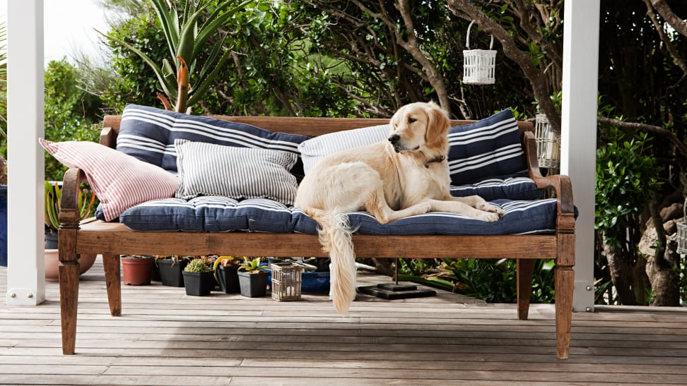 Dog laying atop outdoor cushions