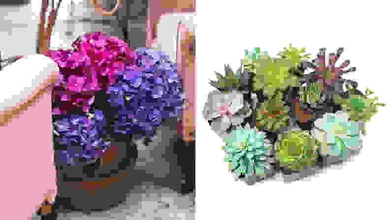 Plants for Pets Succulent Set