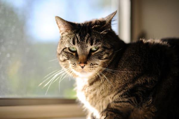 cat at favorite sun spot