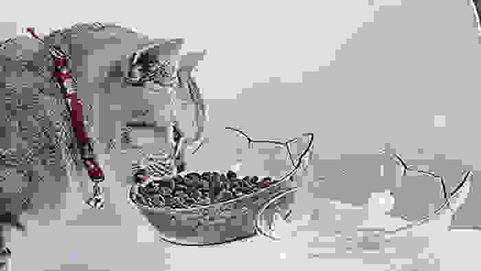 Multipurpose cat bowl