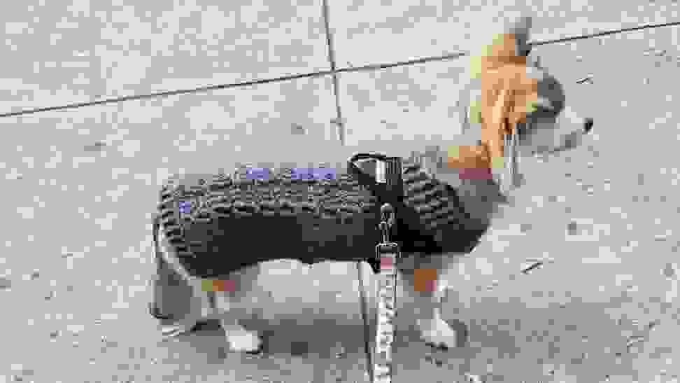 Dog wearing gray cable-knit sweater