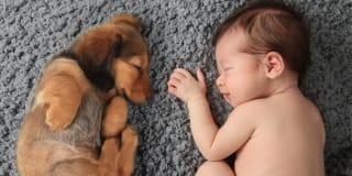 Puppies make adorable sleeping companions, but poor baby monitors. We help recommend a proper baby monitor.