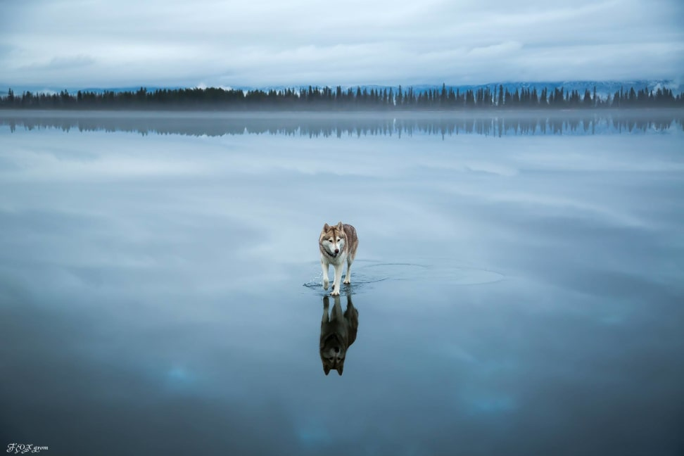 Huskies-Walking-On-Water-2.jpg
