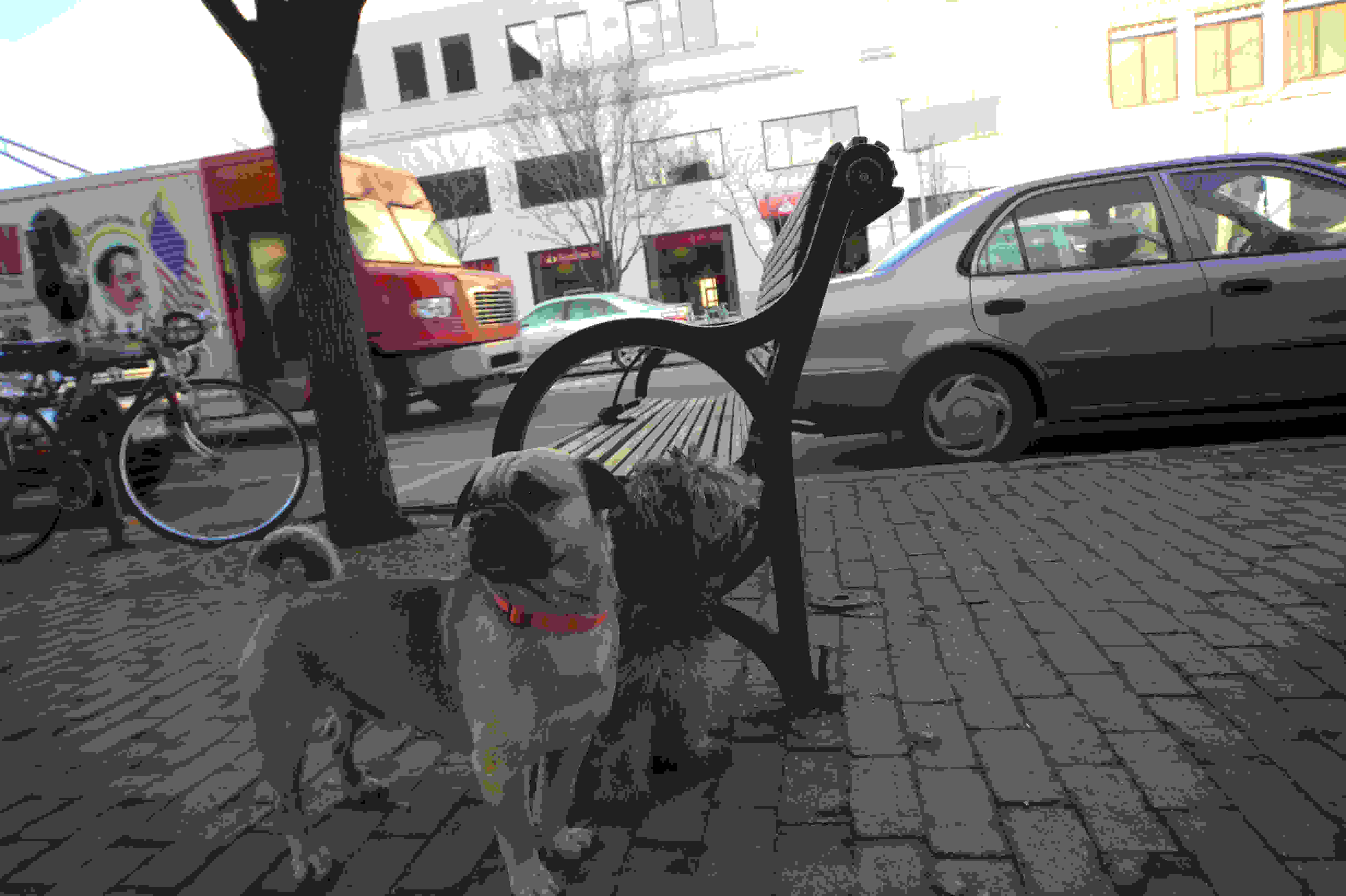 The Nikon D4S isn't the most discrete street shooting camera, but these subjects didn't seem to care.