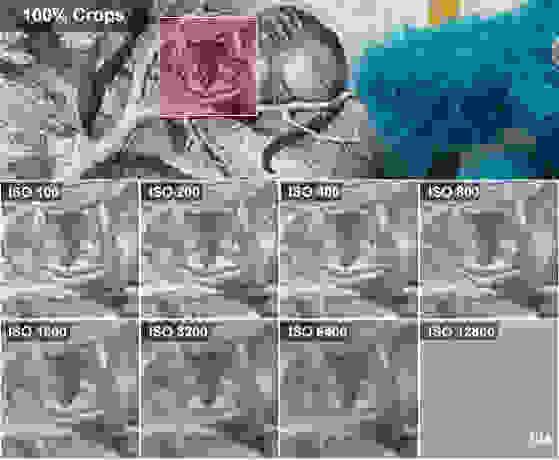 NIKON-COOLPIX-P340-REVIEW-ALICE-CROPS.jpg