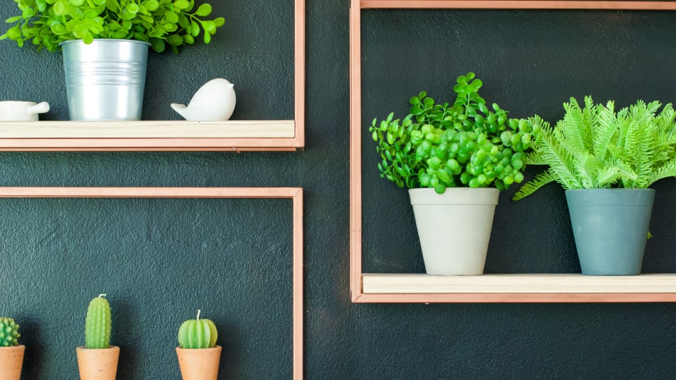 An image of five plants in shelving units, which is good to think about if you're shopping for the best artificial plants.