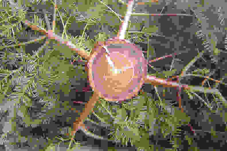 Christmas Tree Trunk