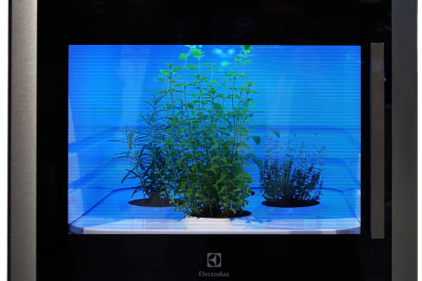 A wall-mounted herb garden for the kitchen from Electrolux