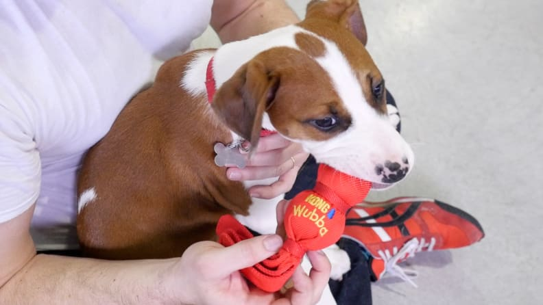 Kong Small Wubba Dog Toy