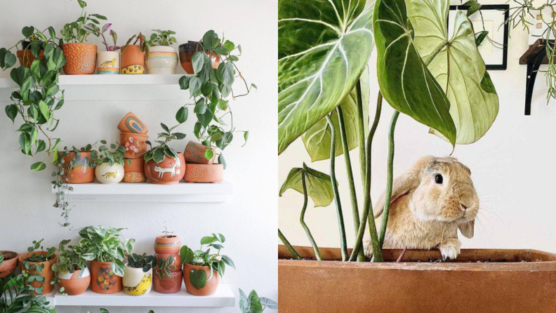 Left: Three wall shelves adorned with potted plants; Right: A bunny peeks out from behind a potted plant.