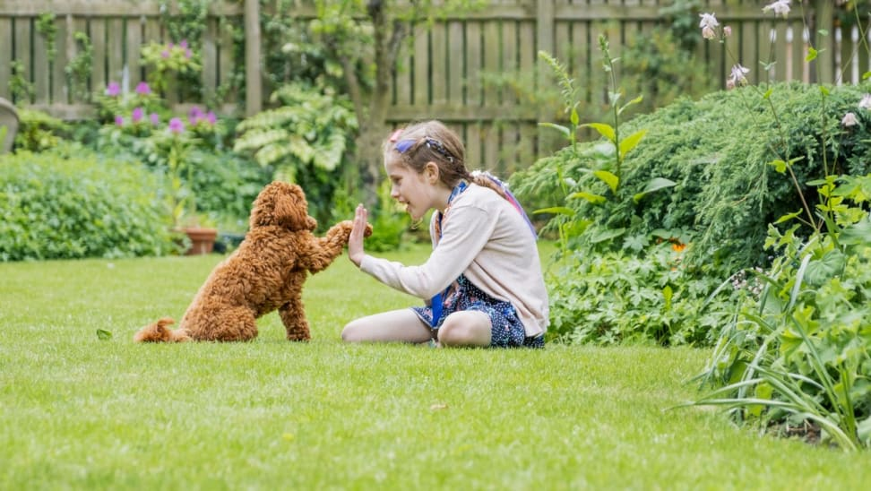 Young child playing outdoors with dog.