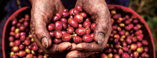 What to know about coffee 1