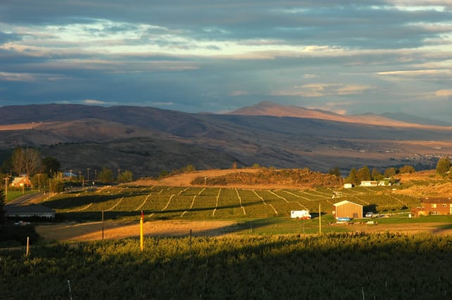 organic farm (markdavis).jpg