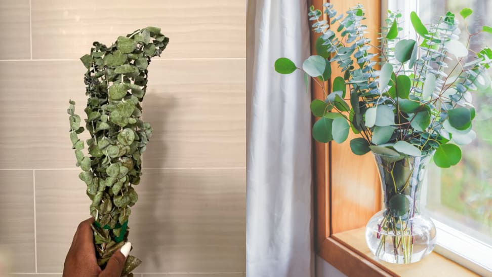 I tried a eucalyptus plant subscription service—and it makes staying home so much better