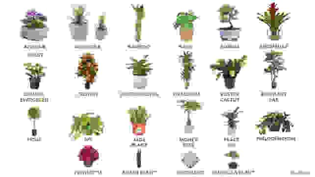 HouseplantsGraphic