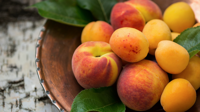 Apricot Body Oil 1