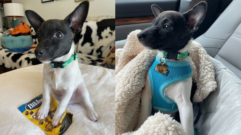 Left: Cash with his favorite treats; Right: Cash in his carseat
