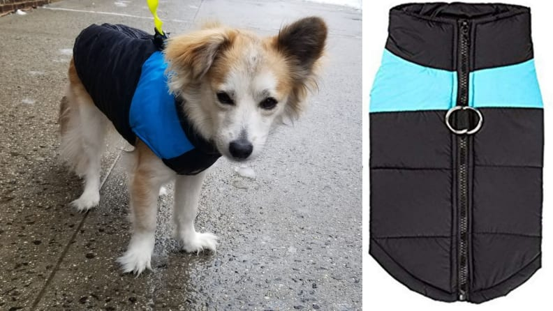 kolodo dog jacket
