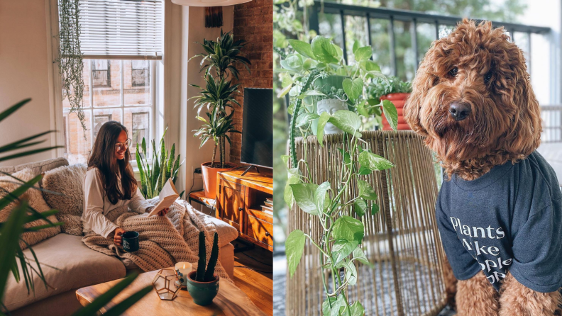A woman in a room of plants and a dog in a tshirt.