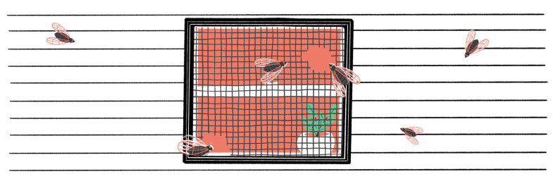 Illustration of cicadas crawling on screen window that has a hole in it
