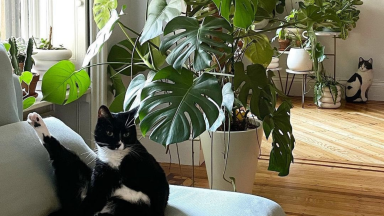A cat sits on a couch with large green plants in the background.