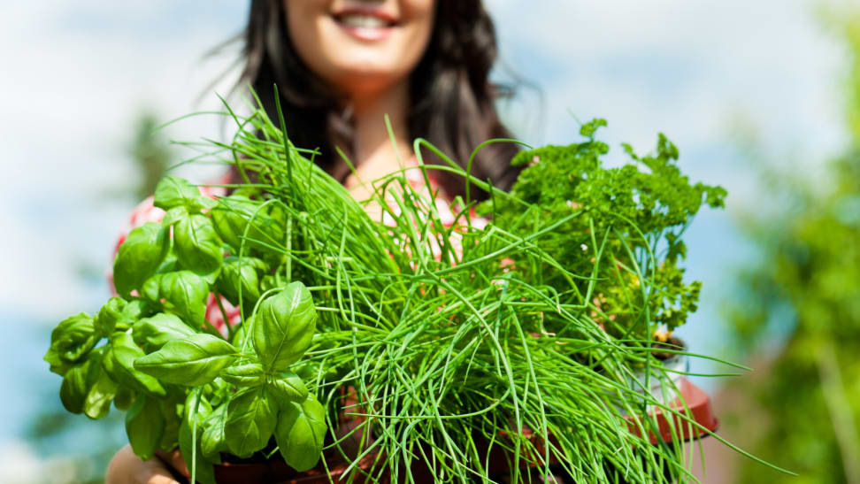 here's how to preserve fresh herbs from your garden