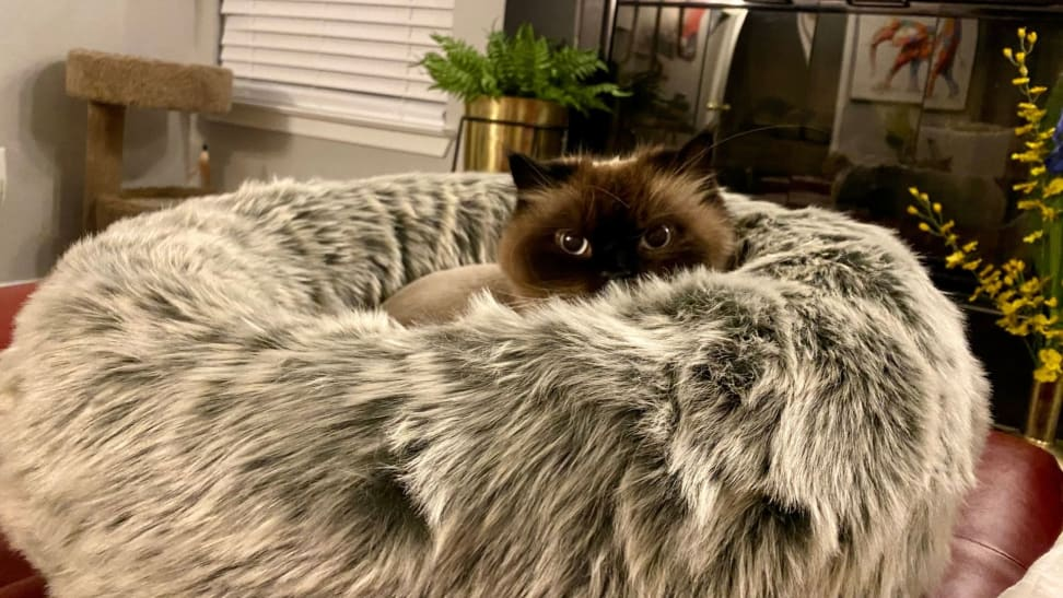 A cat peeks its eyes above the Tuft + Paw Nuzzle cat bed that's covered in gray faux fur