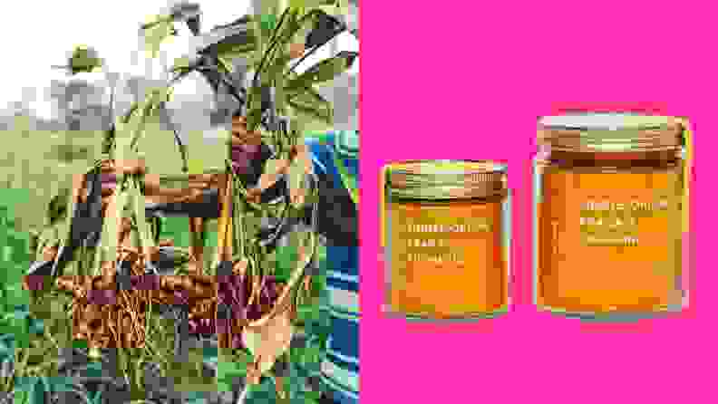 Left: A person hold turmeric that was just harvested. Right: Two jars of bright orange turmeric against a pink background.