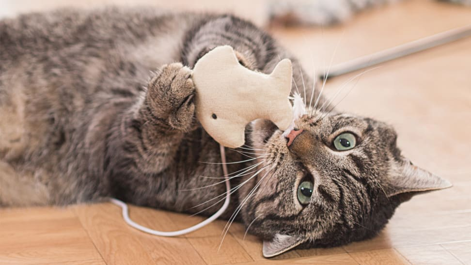 A cat plays with a small fabric toy