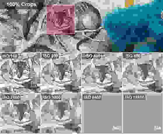 DCI-ALICE-CROPS-SAMSUNG-GALAXY-2.jpg