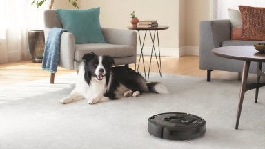 A dog watching the iRobot Roomba 692 cleaning the carpet in a living room.