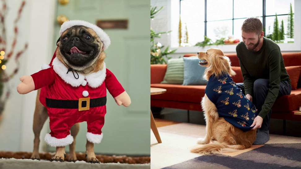 Pup in santa outfit and pup in rudolph sweater