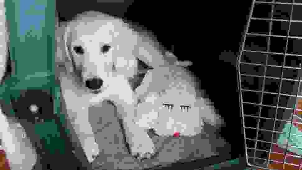 Snuggle Pup