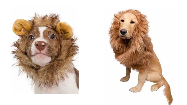 Lion mane dog costumes