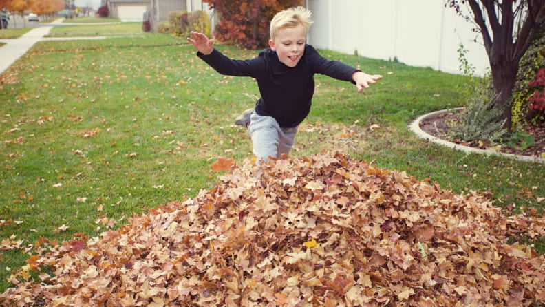 big pile of leaves