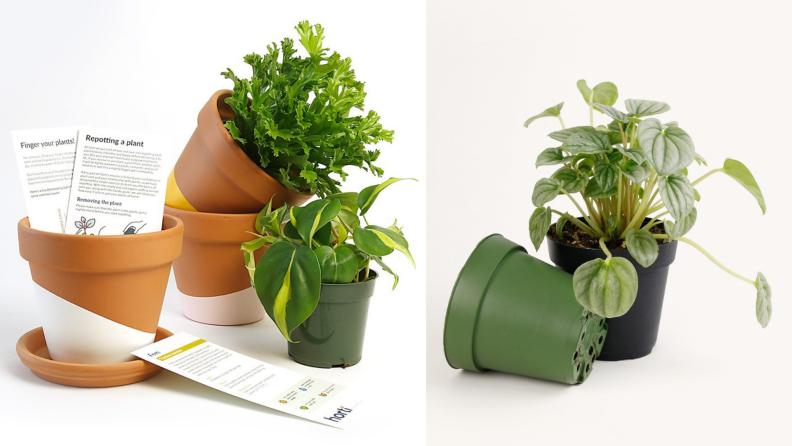 Horti plants