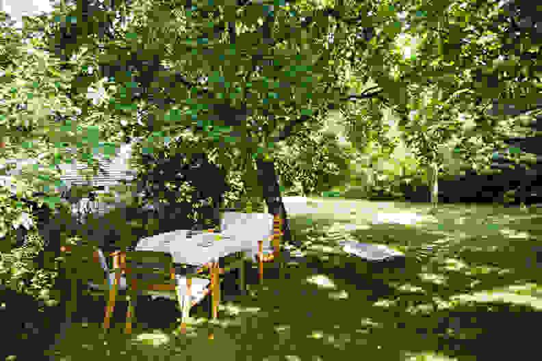 Shady garden with hammock