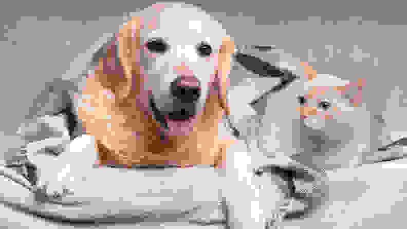 dogcatbed