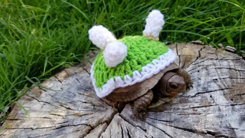 Turtle dressed as Bowser