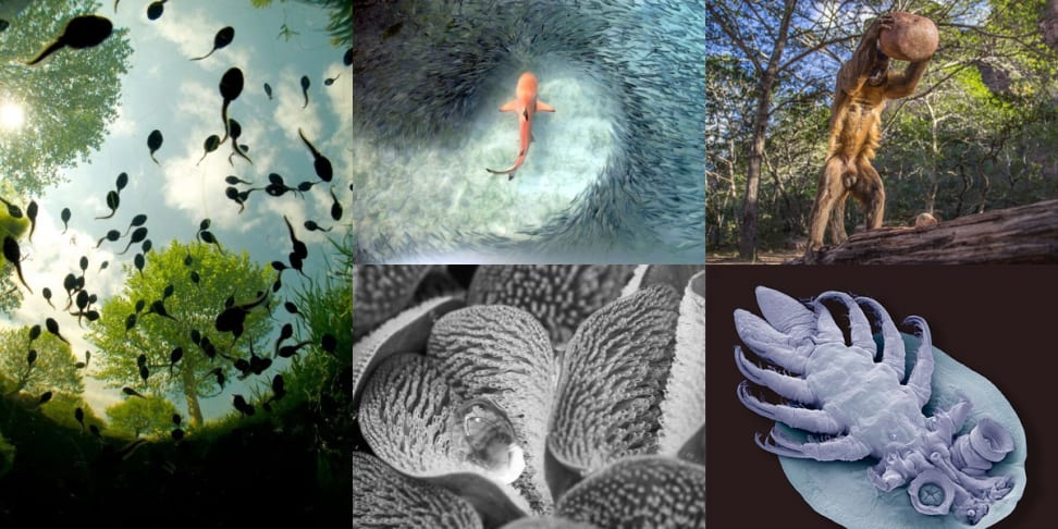 A compilation of the images from The Royal Society's photography competition