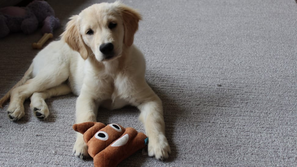 The best puppy products on Amazon